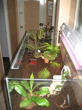 Comment relooker un terra heterometrus spinifer for Conseil sur les plantes