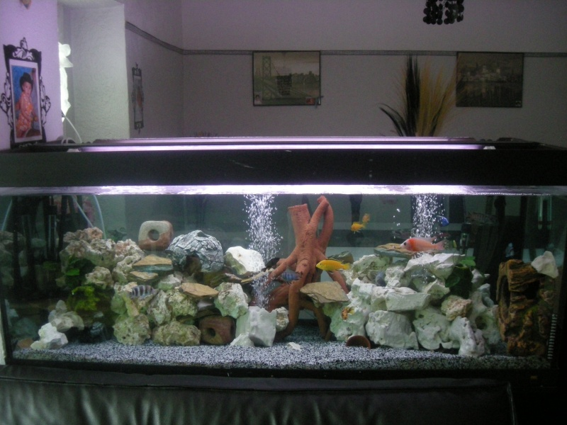 voila mon aquarium 450 litres. Black Bedroom Furniture Sets. Home Design Ideas
