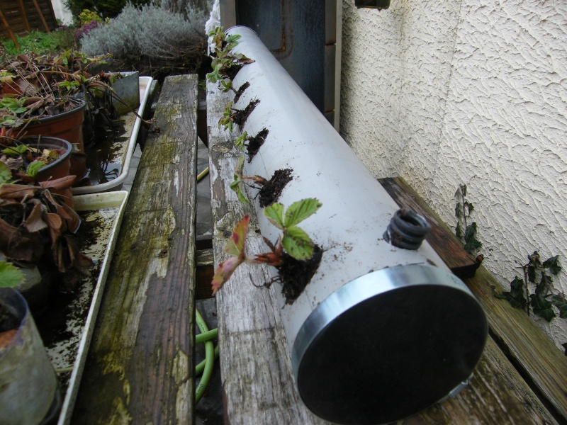 Jardini re aromates verticale page 2 - Jardiniere verticale ...
