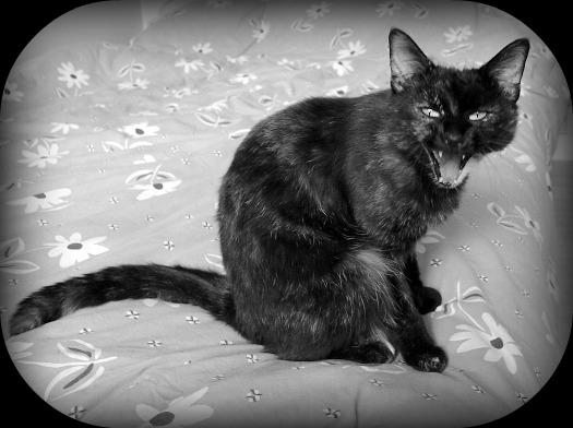 Grimace de chat dans Le Miroir des Chats 01410