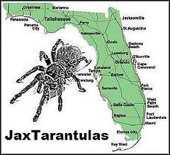 Jax Tarantulas