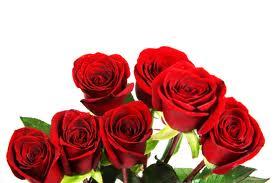 http://i29.servimg.com/u/f29/14/09/18/42/roses_10.jpg