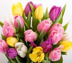 http://i29.servimg.com/u/f29/14/09/18/42/tulipe10.jpg
