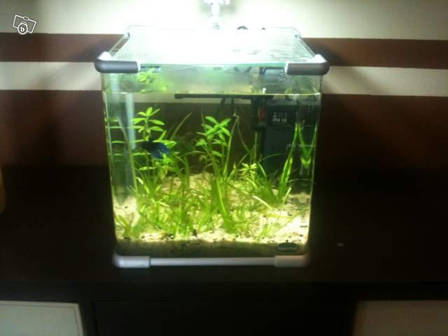 30 41 vends 2 aquariums filtres for Filtre aquarium 20l