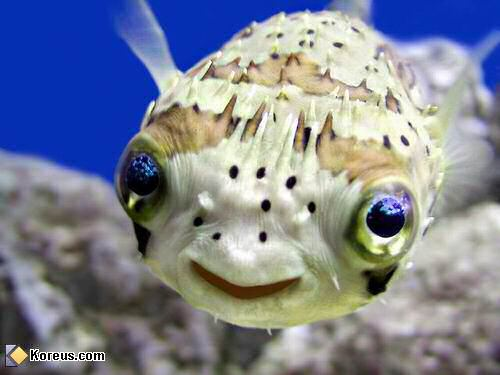 Concoure poissons rigolo for Poisson rouge gros yeux