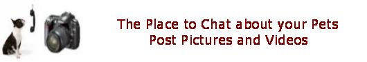 Pet Chat  Photos & Videos