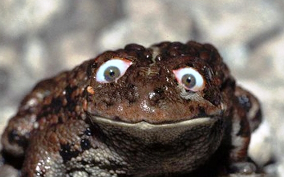 Crazy Frog Naked 54