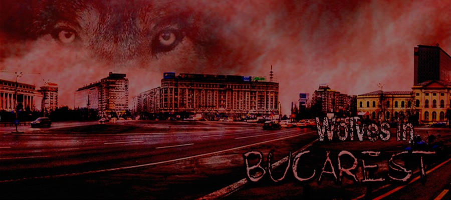 Wolves in Bucarest