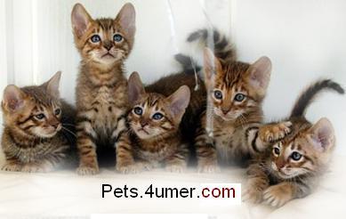 Pets.4umer.com
