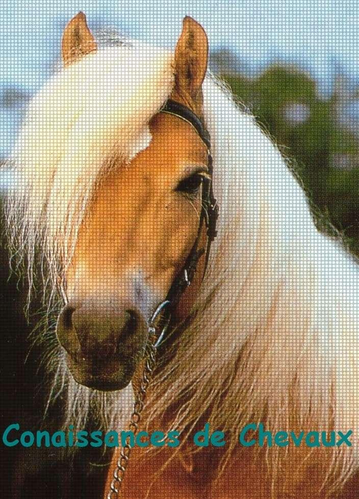 Conaissances des chevaux